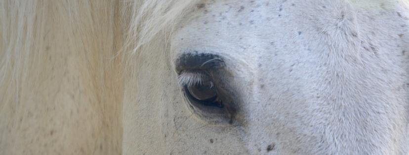 Een goed team door de ogen van een paard